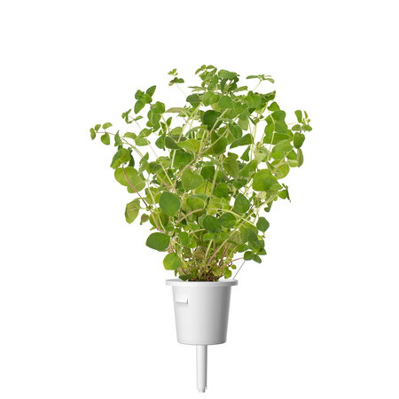 Click & Grow Recharge Smart Garden - Origan